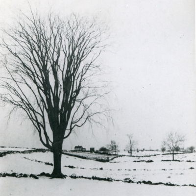 Pasture and farm land up across 405 Tanner Marsh Rd with elm tree which stood bgack at what is now 308 Clapboard Hill Road 1920's095.jpg