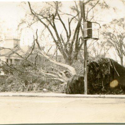 Green after 1938 Hurricane.jpg